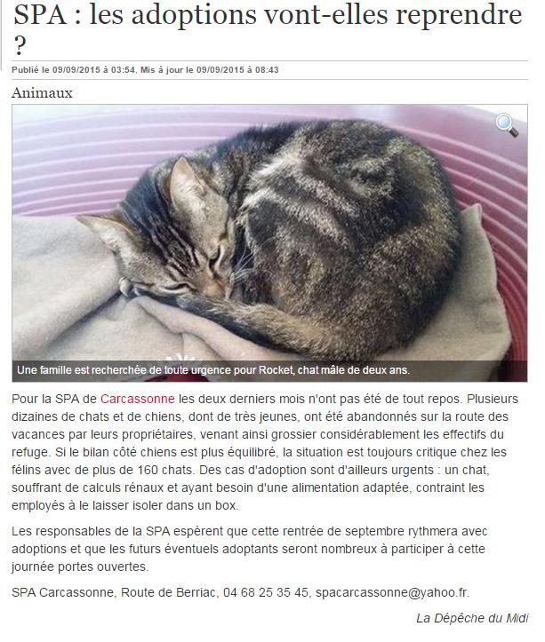 spa carcassonne chien chat adoption refuge. Black Bedroom Furniture Sets. Home Design Ideas